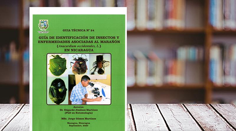 Guía de identificación de insectos