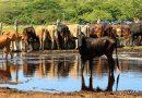 Plan Nacional de Producción de Carne de Res y Leche 2020-2021 en Nicaragua